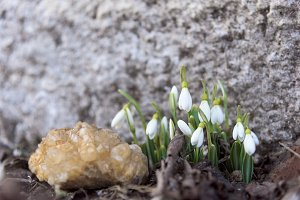 Quartz and lily of the valley