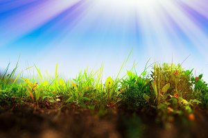 Fresh grass on ground layer landscape with light leak background