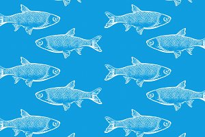 fish, blue background