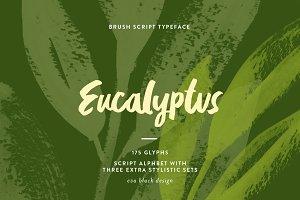 Eucalyptus Brush Script