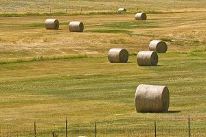 Large round bales of hay