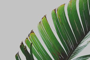 Closeup of a Tropical Leaf
