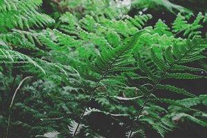 Lush Forest Ferns