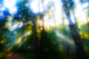 Horizontal dramatic sun rays in forest bokeh background