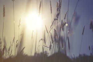 Towards the Sun
