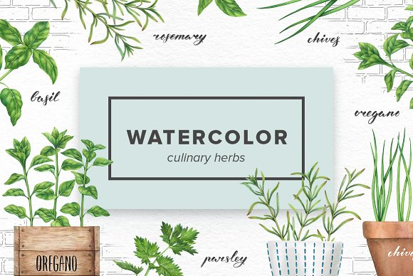 Watercolor Culinary Herbs
