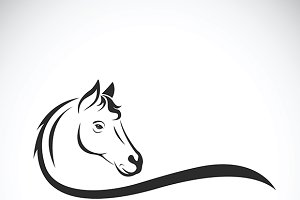 Vector of a horse head. Animal.