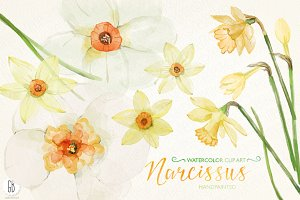 Watercolor narcissus, daffodils