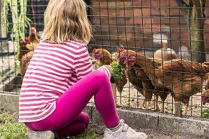 Little girl feeding hens