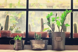 Plants and cactus in room