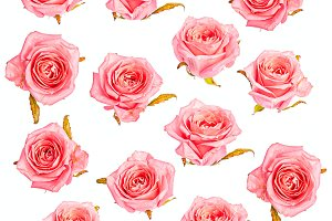 Isolated roses pattern background