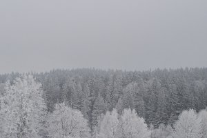 The Winter trees