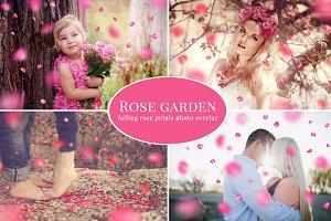 Rose Garden - pink petals overlay