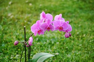 Beautiful orchid flower outdoors