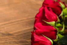Line of red roses