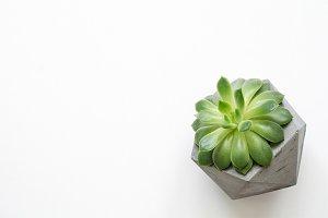 Succulent plant in concrete pot
