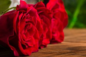 Red roses narrow focus