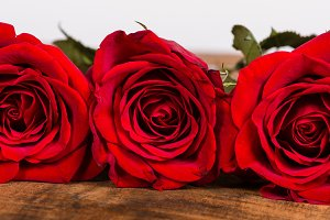 Red roses in a row