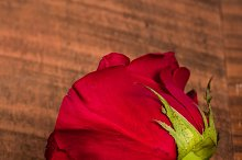Single red rose on rough wood