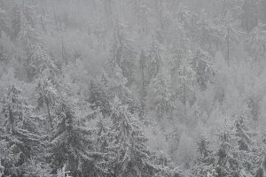 Snowy forest, cold landscape