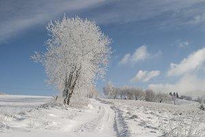 Snowy tree with blue sky