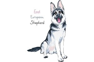 Dog East European shepherd breed