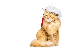 Big ginger cat in christmas hat