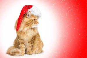 Big ginger cat in santa cap looking the side