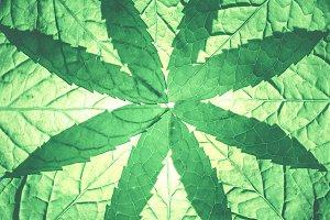 Fresh green shapes