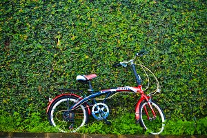 Bike and Hedgerows