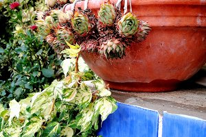 Succulents on pot