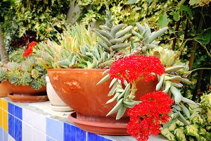 Succulents on pot in green garden