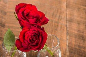 Red roses hugging