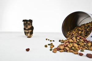 Dog and food