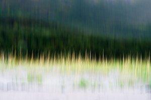 Vertical motion blur grass background