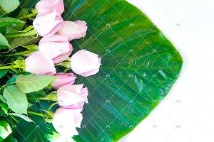 Pink roses on massive green leaf.