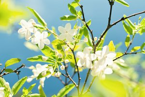 Spring flowers on sky background