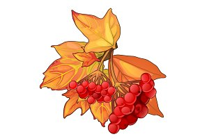 Autumn maple leaves and sprig of red berries