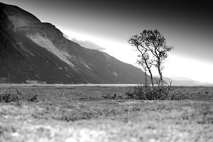 Dramatic black and white lonely tree background