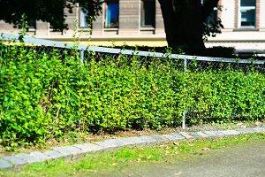 Horizontal park fence background