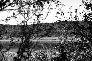 Norway lake through tree branches landscape background