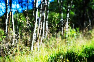 Forest and grass landscape background