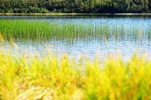 Grass blades in Norway lake bokeh background