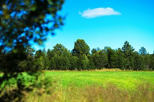 Simple forest with bokeh tree landscape background