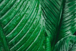 Tropical leaf texture