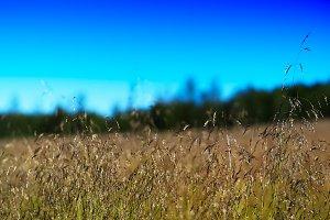 Grass on field landscape background