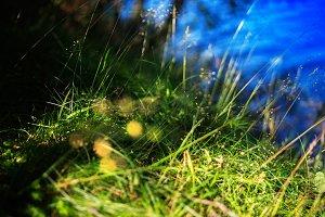 Green grass near lake bokeh background
