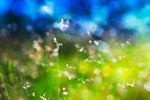 Summer grass on meadow direct sunlight background