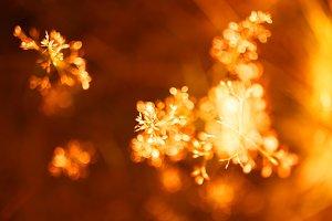 Sunset orange plant bokeh background