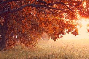 Sunny autumn scene